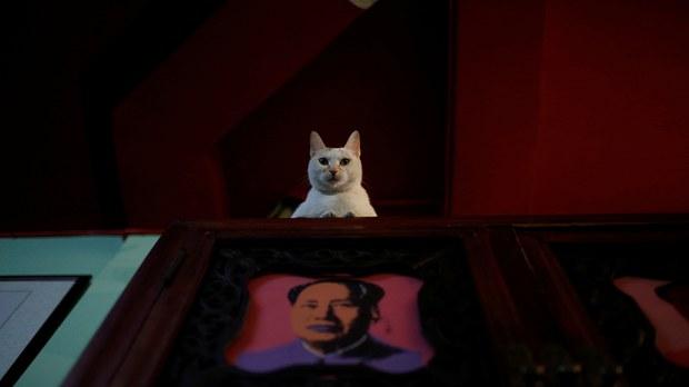 专栏   绿色情报员:走私猫没说的黑心繁殖场