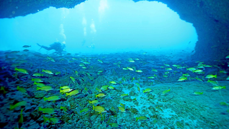 台湾专家指出,东沙岛透过有效管理和执法,恢复海洋生态。(郑明修提供)