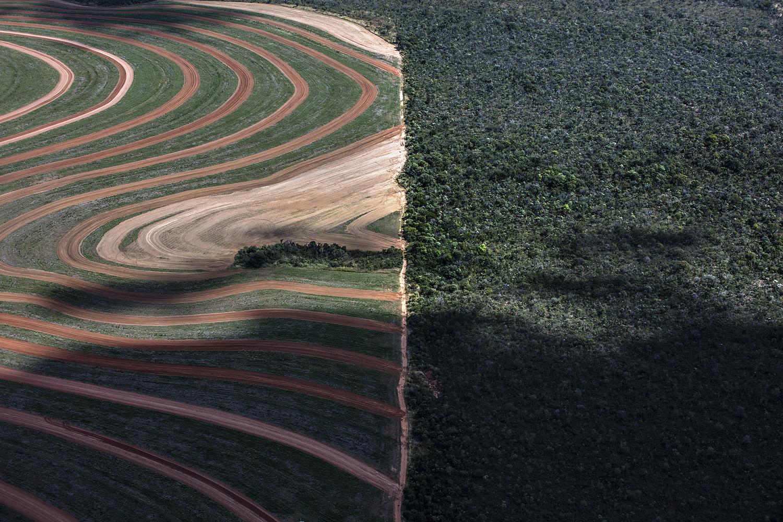 农业开垦区和蓊郁雨林形成明显对比,一线之隔,自然生态破坏殆尽。(绿色和平提供)