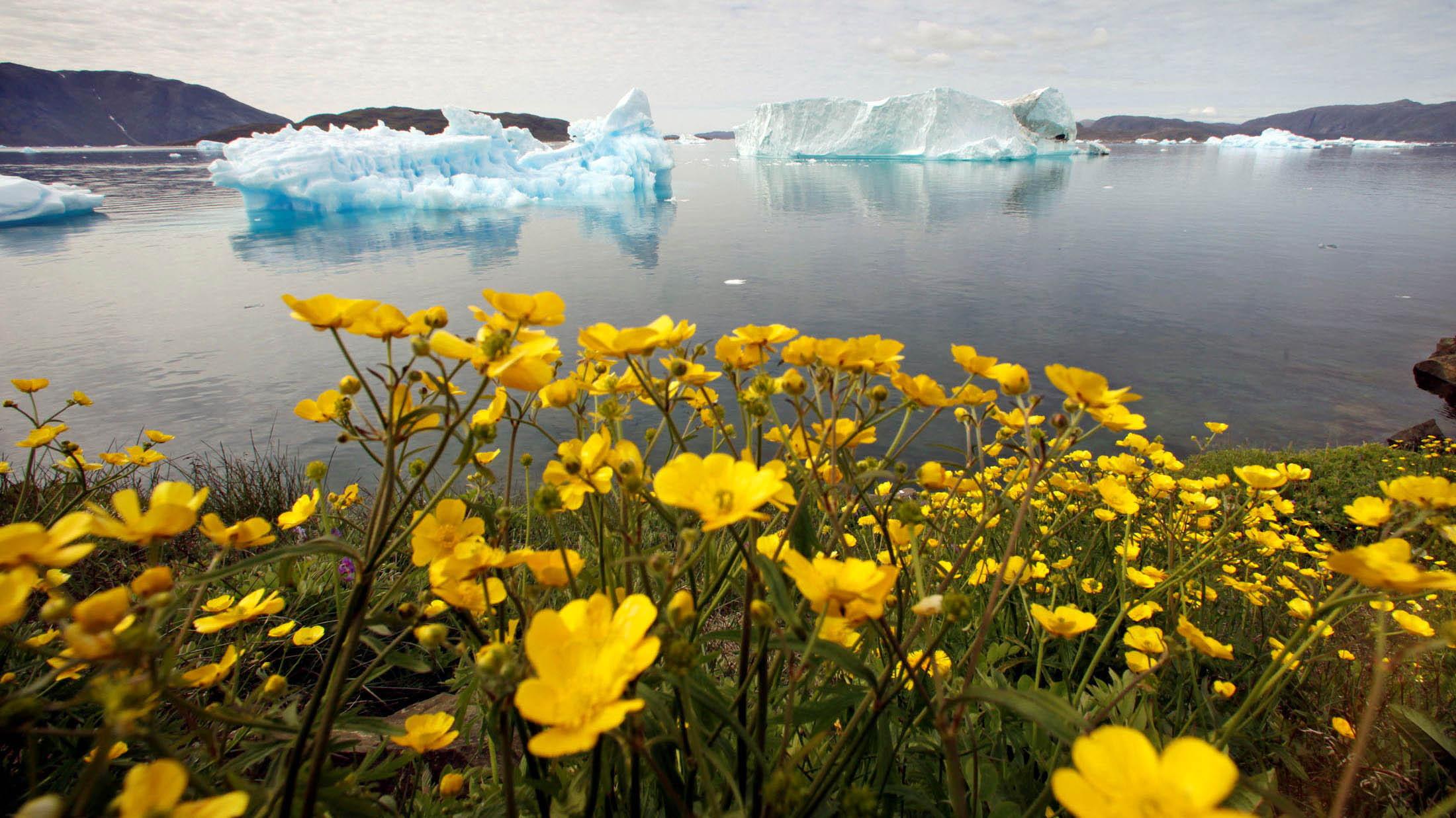 随着暖化加剧,格陵兰的融冰不断创新纪录,上个月冰原顶峰破天荒下雨。(路透社)