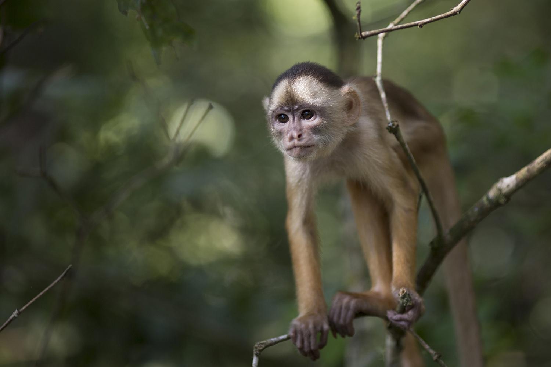 亚马逊雨林孕育丰富生态,大火窜烧,生物多样性跟着火烧屁股。(美联社)