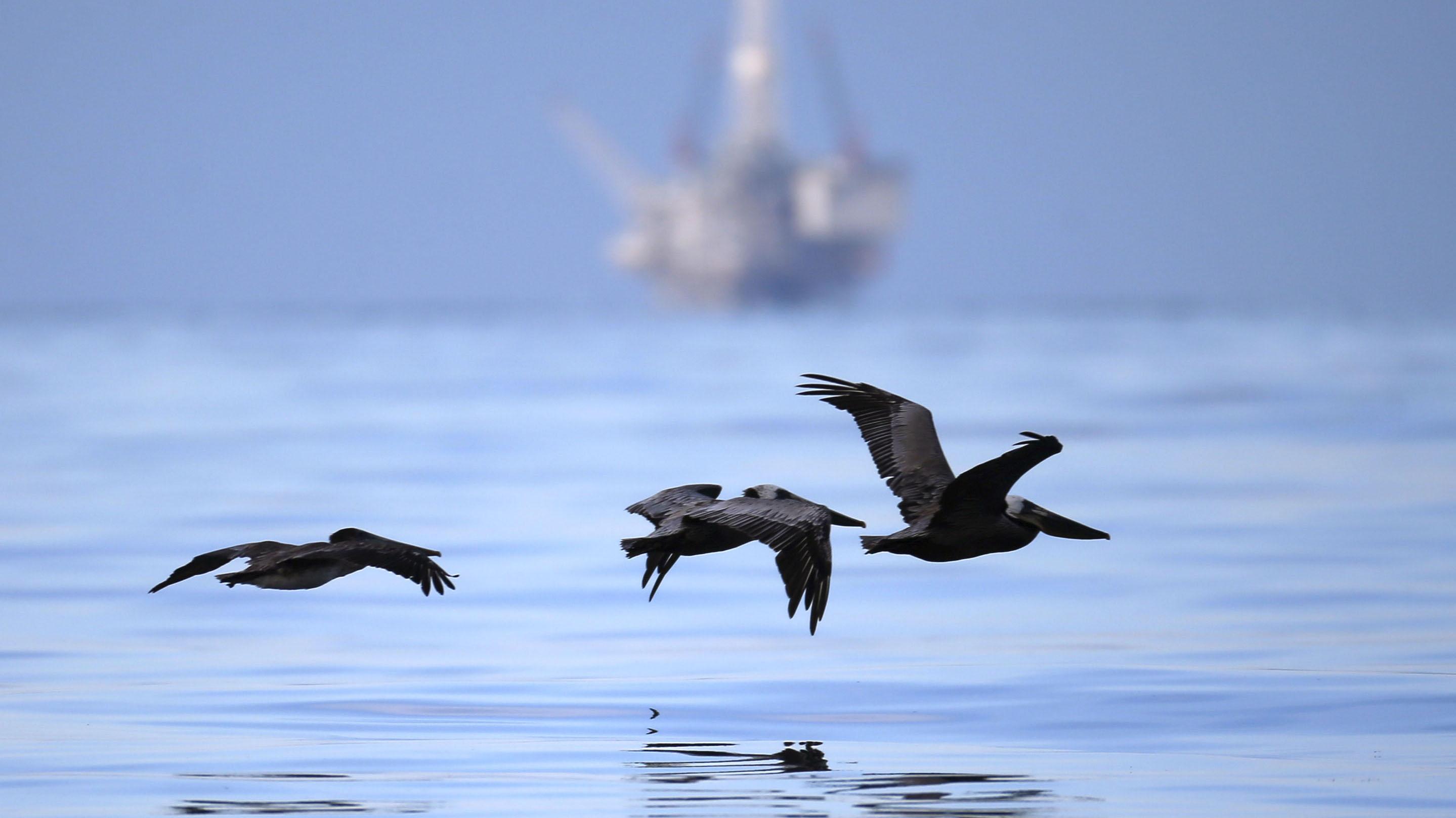 北極地區一但發生油污染事件,環境生態壓力遠大於其他地區。(路透社)