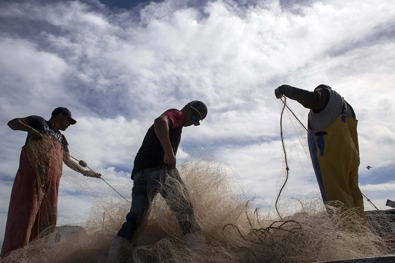 墨西哥黑帮操控石首鱼非法贸易,渔网位置和数量也在其掌控之中。(法新社)