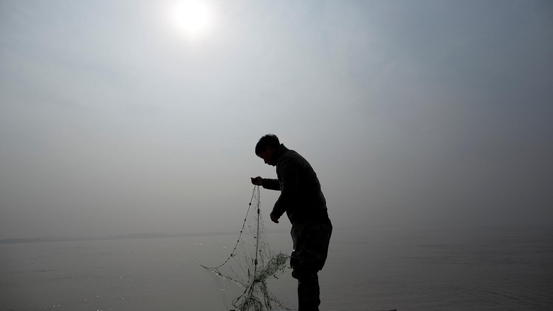 中国沿岸的渔业资源日益枯竭,大黄鱼是代表性的濒危鱼种。(路透社)