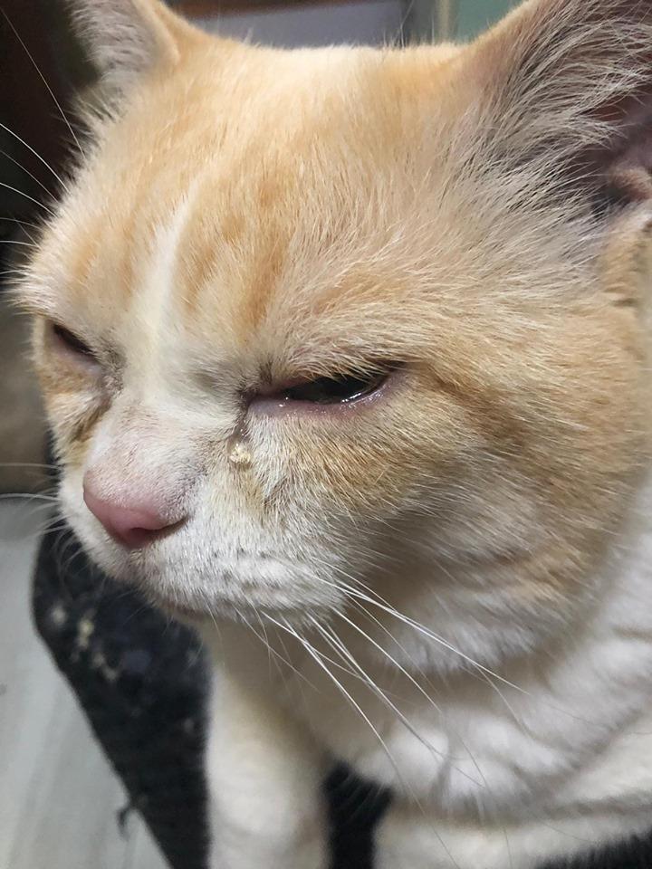 深水埗的猫咪因催泪弹烟雾,导致眼睛不适落泪。(陈嘉铭提供)