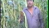 Dixan-Awaz-Hekim-S3-305