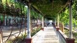 Турпан яшлар кочиси үзүм бариңи. 2005-Йили 10-феврал.
