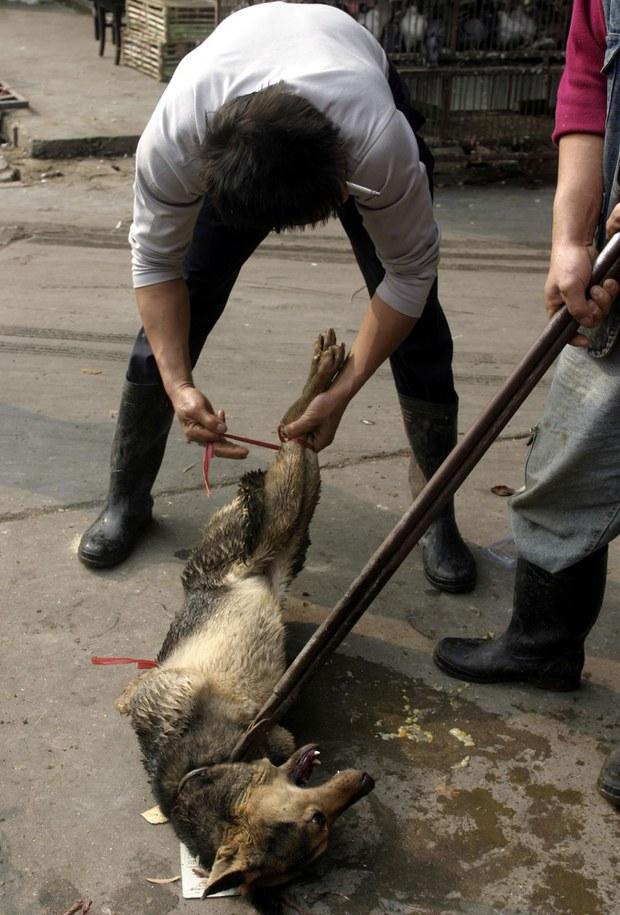 xitay-yawayi-haywanlar-baziri.jpg
