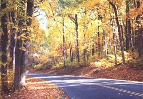 autumn_ngang2_300.jpg