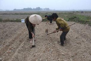 Người nông dân làm ruộng tại tỉnh Bắc Giang, ảnh chụp hôm 14-02-2012. AFP PHOTO.
