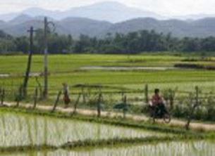 Cánh đồng lúa đồng bằng sông Cửu Long