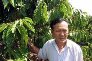 Ông Nguyễn Văn Bé chủ vườn,  trồng loại cà phê Robusta ở Long Khánh, Đồng Nai