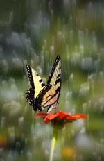 Hoa và bướm. Photo by Dolinh, RFA