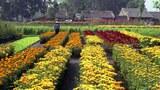 Hoa được trồng để chuận bị cho những ngày lễ, và Tết. (ảnh minh họa)