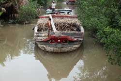 Một nhánh sông Mêkông thuộc địa phận Việt Nam. RFA PHOTO.