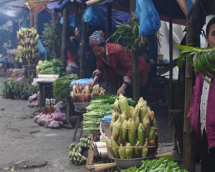 Sau khi vào rừng hái rau dại, các cụ phải mang xuống chợ bán. (Minh họa)