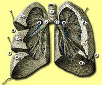 LungPhoi200.jpg