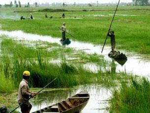 Nước ngập ruộng là do mưa kết hợp với triều cường chứ không phải lũ. Nguồn Vietnam-plus