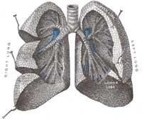 Lung200.jpg