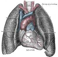 Lung200b.jpg