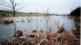 Tác hại của bùn đỏ thải ra ãnh hưởng rất lớn đến môi trường sống