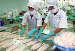 Chế biến cá ba sa xuất khẩu tại Việt Nam.