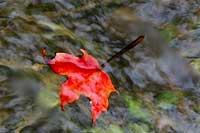 LeafAutumn200.jpg