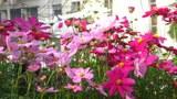 FlowerDuaSac305.jpg