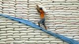 rice-export-305.jpg