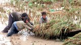 Nông dân vùng  sông nước Cửu Long