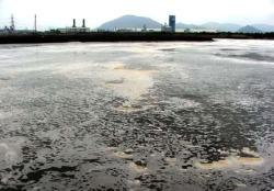 Sông Thị Vải bị ô nhiễm. Photo courtesy of nongnghiep.vn