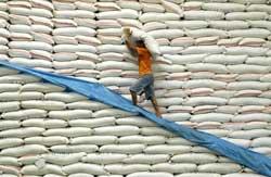 Gạo Việt Nam xuất khẩu sang thị trường Philippines. AFP PHOTO.