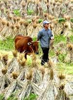 RiceFarmer150.jpg