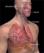 LungHuman150.jpg