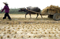 drought_farmer200.jpg