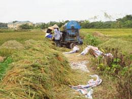 Nông dân sử dụng máy đập lúa. RFA