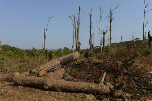 Ảnh minh họa. Rừng ở tỉnh Đăk Lắk. Hình chụp ngày 12/3/2013.