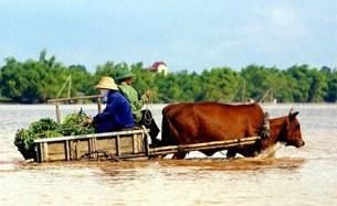 Mùa lũ ở Đồng Bằng Sông Cửu Long. AFP