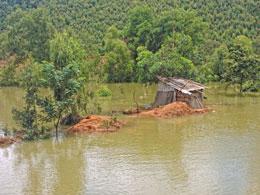 Nước lên nhanh nhấn chìm cả ngôi nhà, cây cối chỉ còn mỗi cái chuồng gà nằm trên gò đất cao (Ảnh: Băng Tâm)