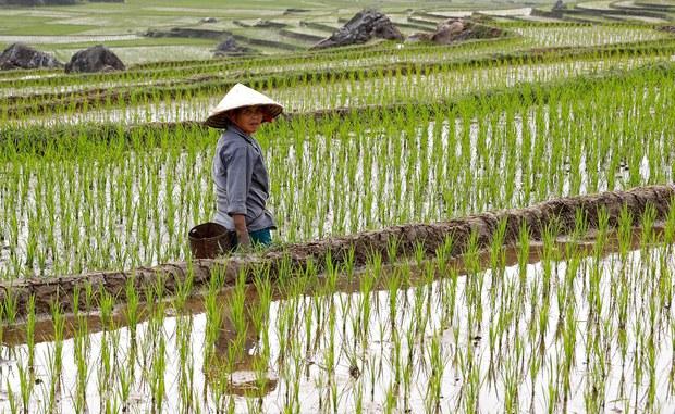 Cơ chế hiện nay có thể giúp Việt Nam tháo nút thắt đất đai để nông nghiệp phát triển?