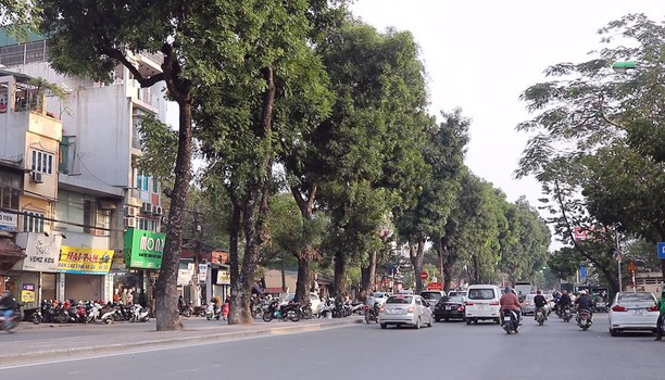 Hàng cây Sà Cừ trên đường Láng, Hà Nội.