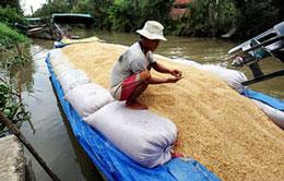 Lúa gạo được nông dân dùng ghe lớn di chuyển trên sông Tiền Giang. AFP
