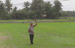 Nông dân chăm sóc lúa ở ĐBSCL, ảnh chụp năm 2013. RFA PHOTO.