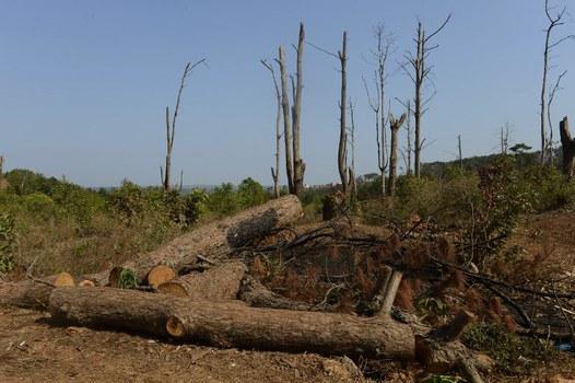 Nạn phá rừng tràn lan ở Việt Nam.