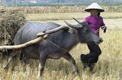 Ruộng trong hạn hán-Vĩnh Phúc. AFP photo