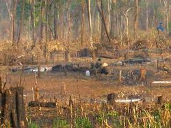 Rừng bị chặt phá rồi đốt để làm rẫy. Photo courtesy of vtc.vn