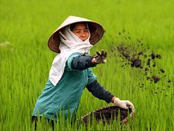 Nông dân Việt Nam- leavefreedom.blogspot.com photo