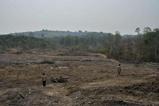 Một khu rừng ở Campuchia được giao cho tập đoàn Hoàng Anh Gia Lai khai phá để trồng cao su.