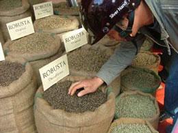 Khách hàng đang xem các mẫu cà phê robusta. Courtesy giacaphe.com