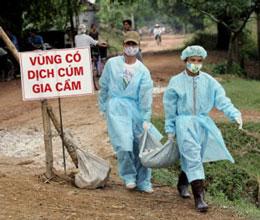 Khu vực có dịch cúm thường được cô lập hầu ngăn chặn sự lây lan. AFP